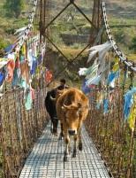 Bhutan one